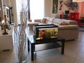 Immobiliare Caporalini real-estate agency - Apartment - Ad SS639 - Picture: 4