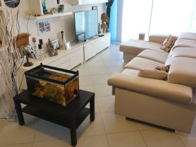 Immobiliare Caporalini real-estate agency - Apartment - Ad SS639 - Picture: 5