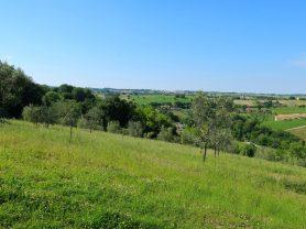 Immobiliare Caporalini real-estate agency - Villa - Ad SS660 - Picture: 105