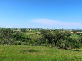Immobiliare Caporalini real-estate agency - Villa - Ad SS660 - Picture: 106