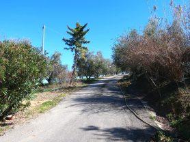 Agenzia Immobiliare Caporalini - Casa colonica - Annuncio SS677 - Foto: 41
