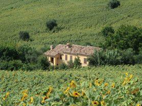 Agenzia Immobiliare Caporalini - Casa colonica - Annuncio SS677 - Foto: 56
