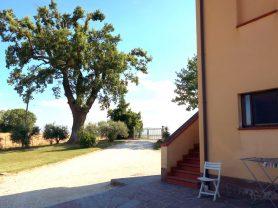Agenzia Immobiliare Caporalini - Casa colonica - Annuncio SS699 - Foto: 10