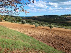 Agenzia Immobiliare Caporalini - Terreno agricolo - Annuncio SS706 - Foto: 2