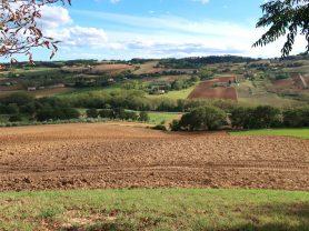 Agenzia Immobiliare Caporalini - Terreno agricolo - Annuncio SS706 - Foto: 5