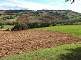 Agenzia Immobiliare Caporalini - Terreno agricolo - Annuncio SS706 - Foto: 6